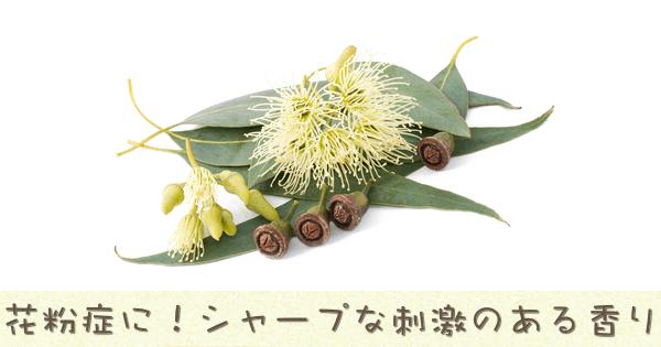 ユーカリ・グロブルスは花粉症にオススメのアロマオイル精油です