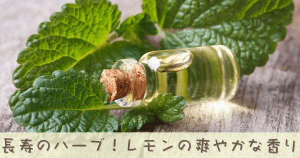メリッサ/レモンバームは万能薬とも呼ばれていたアロマオイル精油です