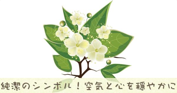 マートルは純潔の象徴のアロマオイル精油です