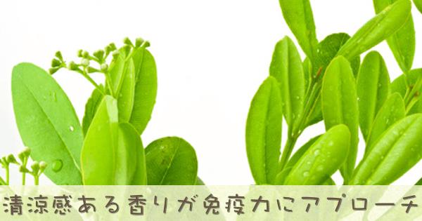 ラビンツァラは安全な定番のアロマオイル精油です