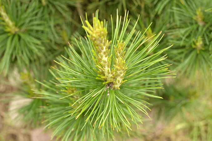 森林系アロマオイル(精油)