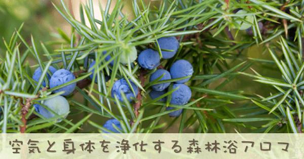 ジュニパーベリーは森林系の香りがするアロマオイル(精油)です